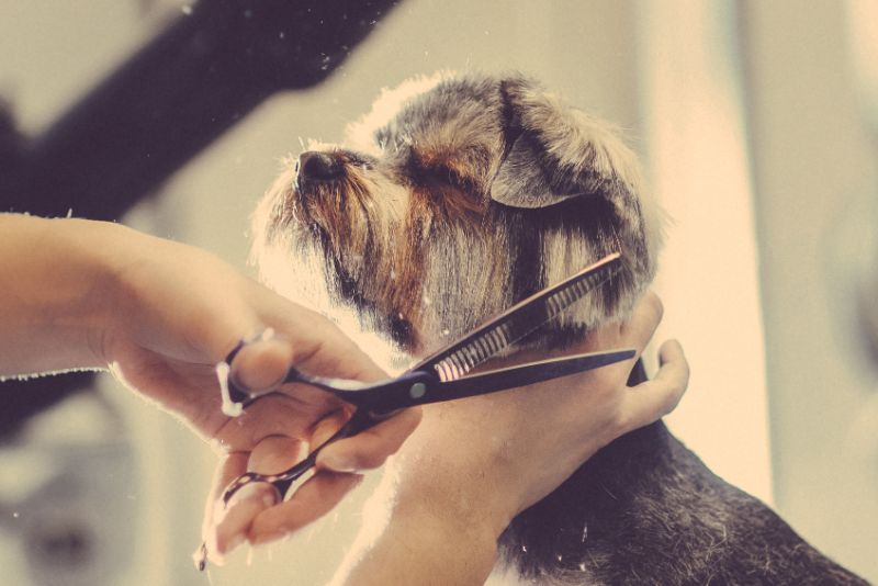 A Great Grooming Experience Will Keep Your Dog Happy!