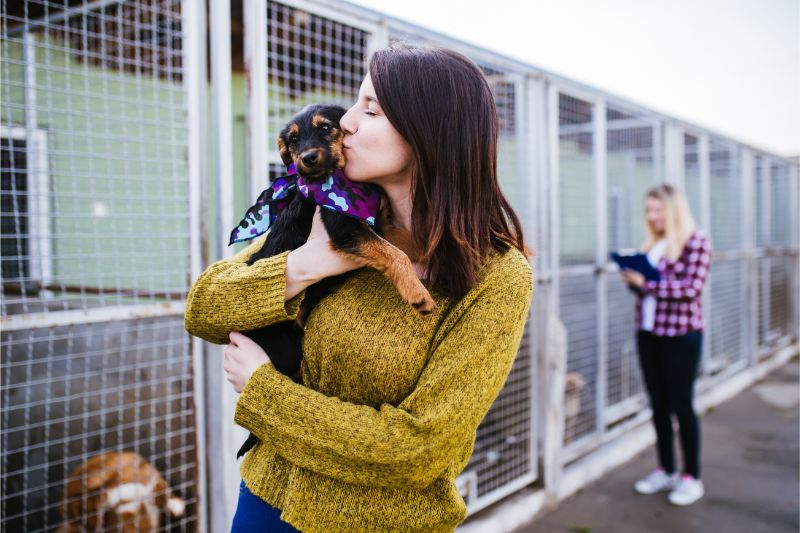 Animal Shelters Provide a Variety of Animal Services