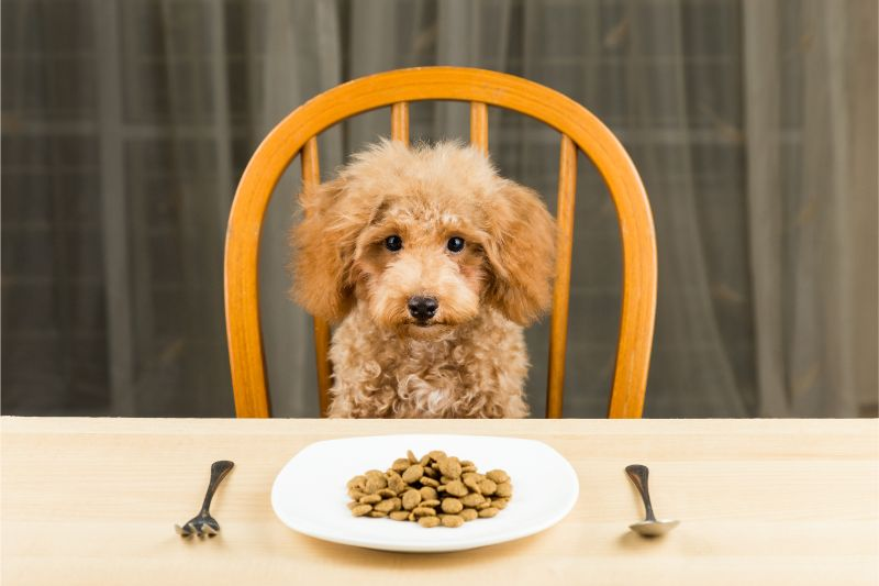 Do You Know What Goes Into Your Dog's Food?