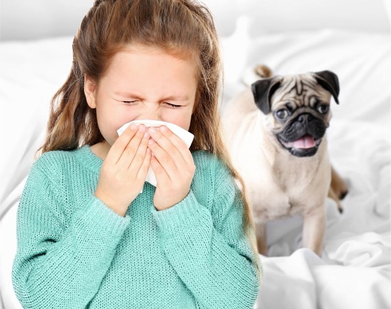 Keep Your Allergies In Check With a Hypoallergenic Type of Dog